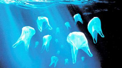 'We reduced the use of plastic bags by 80 percent.'